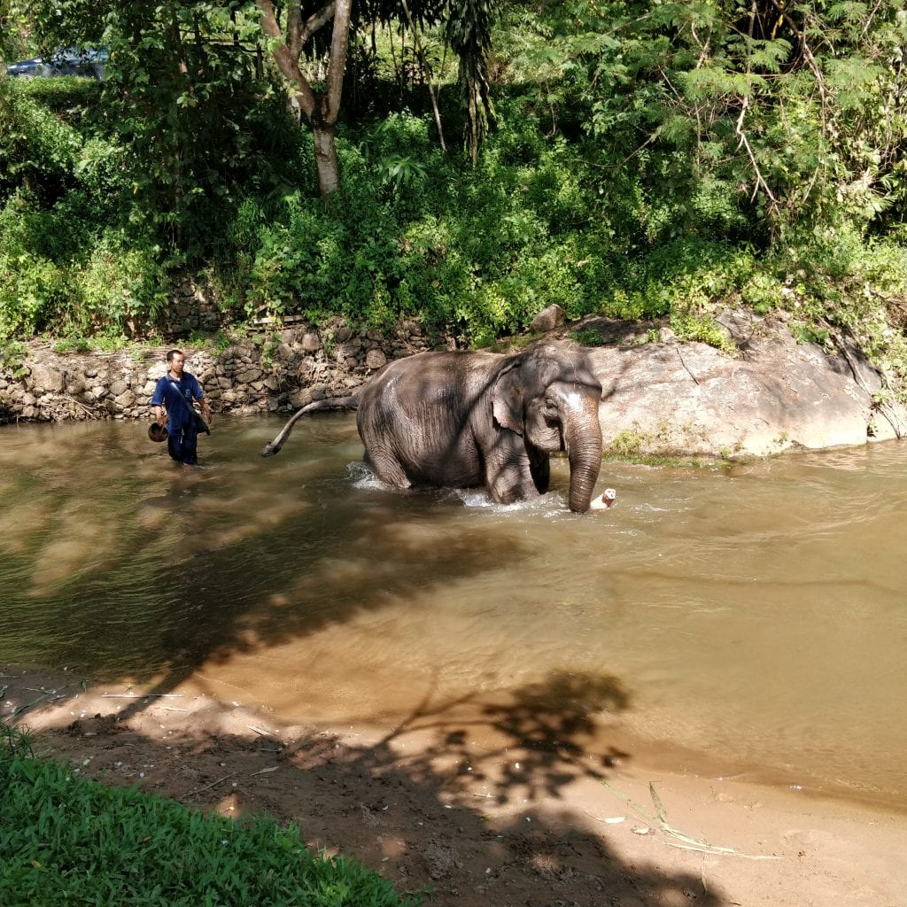 Elephant going into the river